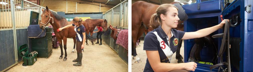malle-equitation