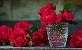 Pourquoi la rose symbolise l'amour?