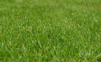 Les avantages d'une pelouse artificielle