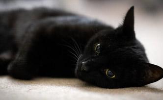Comment protéger nos animaux de compagnie des effets secondaires du confinement?